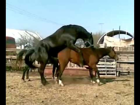 Animal mating 114 - YouTube