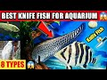 BEST KNIFE FISH FOR AQUARIUM 8TYPES, PRICE | chital, clown knife, black ghost, aba aba, indian knife