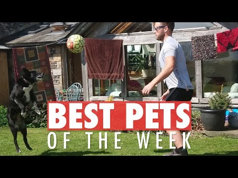 Best Pets of the Week | June 2018 Week 3