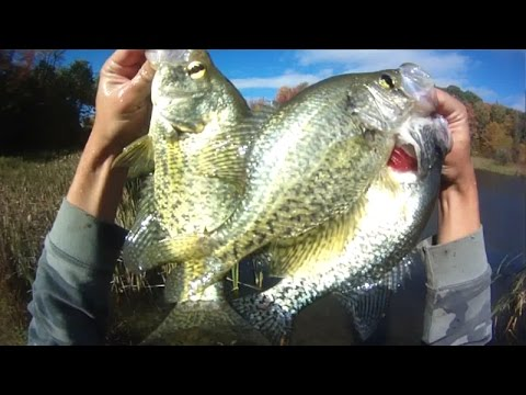 Lure fishing 85 berkley gulp minnow jig fishing for for Crappie fishing with minnows