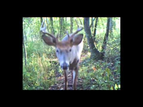 Trail Cameras: What You've Been Missing - Reality Deer Management Ep. 8