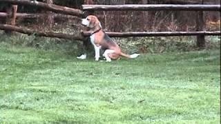 Arson Detection Dog Practice