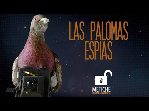 PALOMAS ESPIAS, LOS PRIMEROS DRONES. Fotografía aérea y espionaje - Julius Neubronner