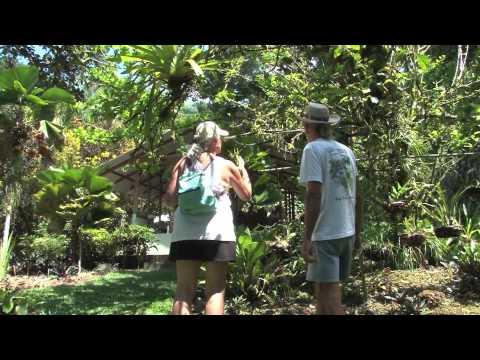 Costa Rica's Casa Orquideas Garden