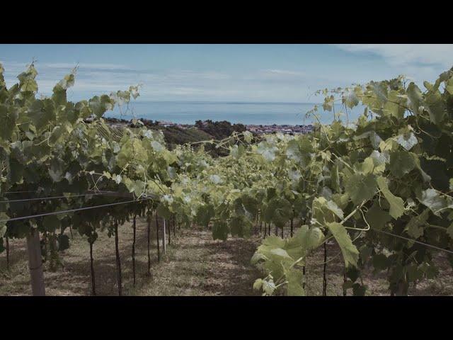 VINEYARDS | PECORINO | TERAMO | THE PORTRAIT OF ABRUZZO'S WINES