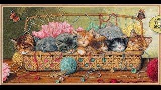 СП Мои любимые коты Kitty litter Dimensions - Подготовка