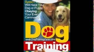 The Best Secrets To Dog Training!