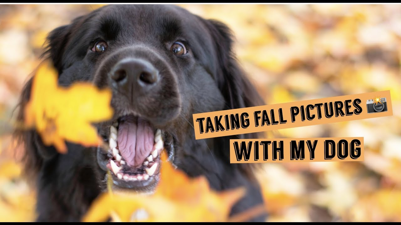 Taking Fall Pictures With My Dog