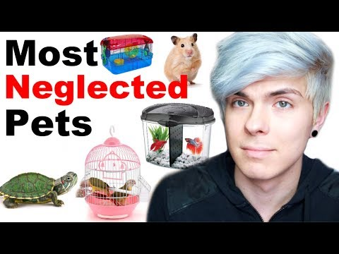 Pets People Often Neglect Without Knowing It