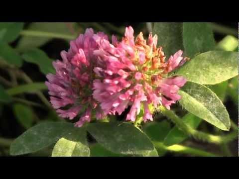 Kentucky Nature Video