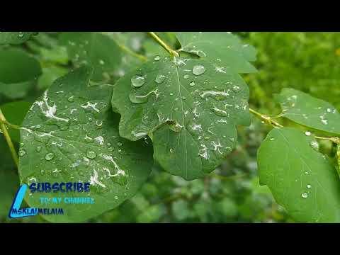 Московское лето  дожди,лужи и цветы