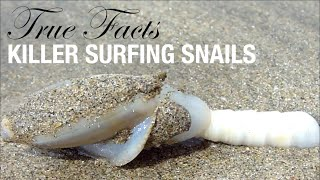 True Facts: Killer Surfing Snails