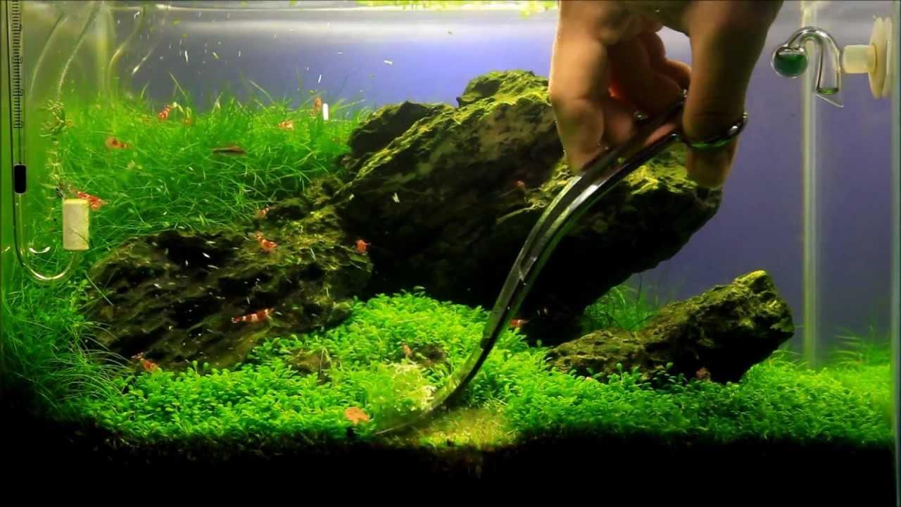 Just Aquascaping Maintenance Mini M Iwagumi Youtube
