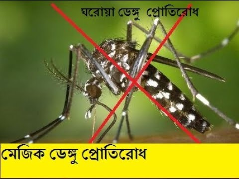 Dengue In Bengali