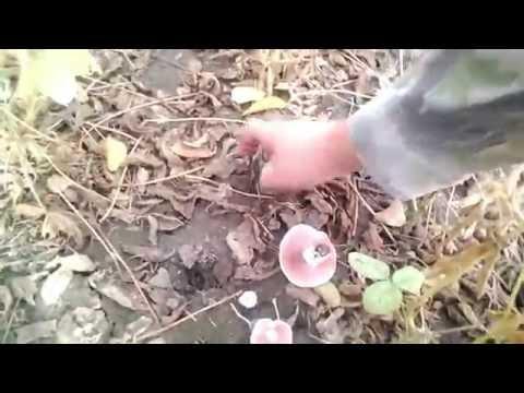Шампиньоны на гриле: различные способы приготовления