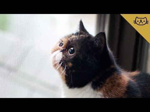 Pudge the Cat Goes Bird Watching