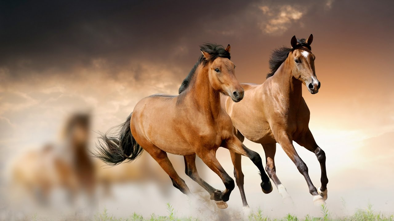 Beutiful Houses Apache The Shadows  Beautiful Horses  Youtube