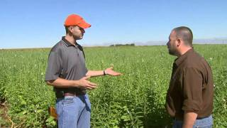 Sesame Production and Weed Control