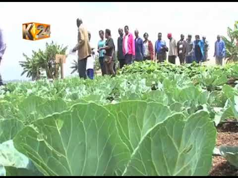 A group of Maasai women embrace a modern way of farming