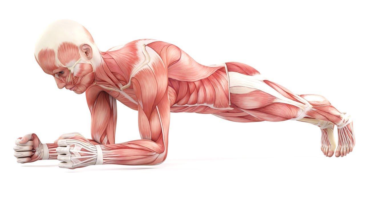 Das Passiert Mit Deinem Körper Wenn Du Täglich Planks Machst Youtube