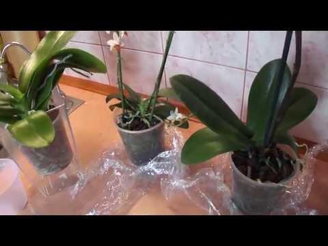 орхидею фото пересаживать когда