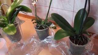 Смотреть видео только что купленная орхидея
