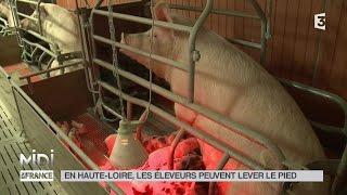 ANIMAUX : En Haute-Loire, les éleveurs peuvent lever le pied