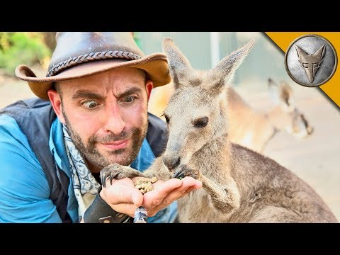Kangaroo Feeding Time!