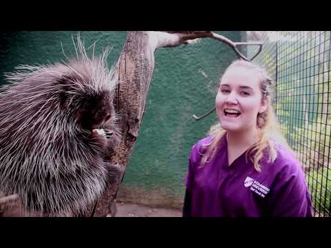 Stanbridge University Vet Tech Student Designs Enrichment Program for OC Zoo Animals