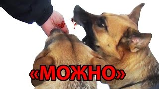 Можно :) или как собачники теряют свои пальцы