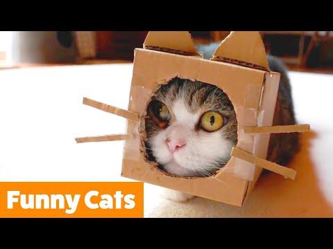 Cute Cat Bloopers | Funny Pet Videos