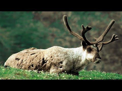grandes-documentales---la-naturaleza-en-el-fin-del-mundo.-escandinavia