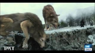 За кадром Рассвета. Часть 2: Эффект волков