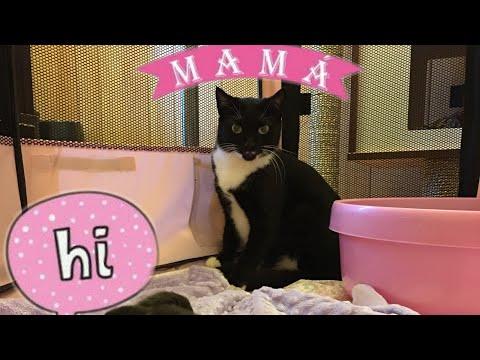 New Mama Cat and Kittens! New Years Kittens!