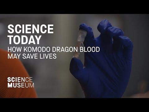 How Komodo dragon blood may save lives