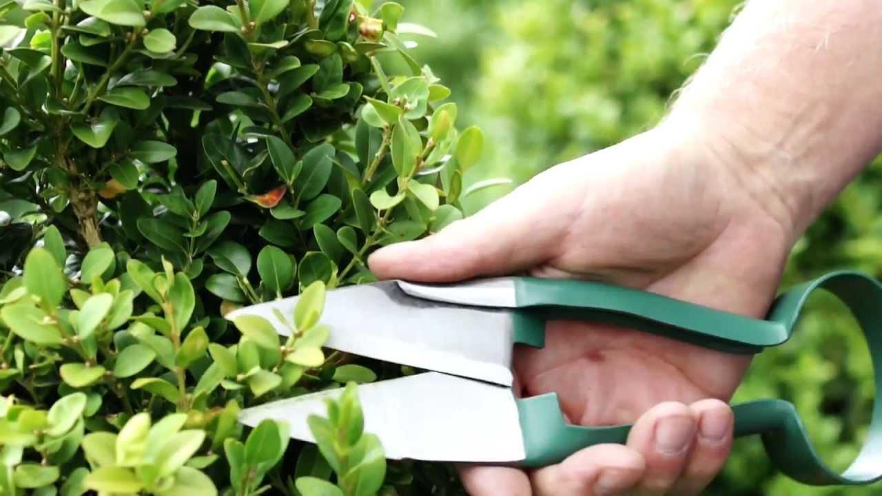 Burgon & Ball Topiary Care - YouTube