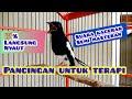 Pancingan Suara Untuk Terapi Burung Kacer  Mp3 - Mp4 Download