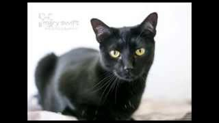 Betty Lou pet of the Week WNEW FM 99 1 All News