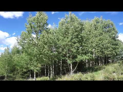 Cripple Creek Land for Sale with Water and Electricity