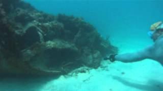 Miami Lionfish