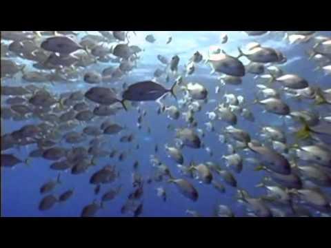 Best Belize Beaches HD 1080p