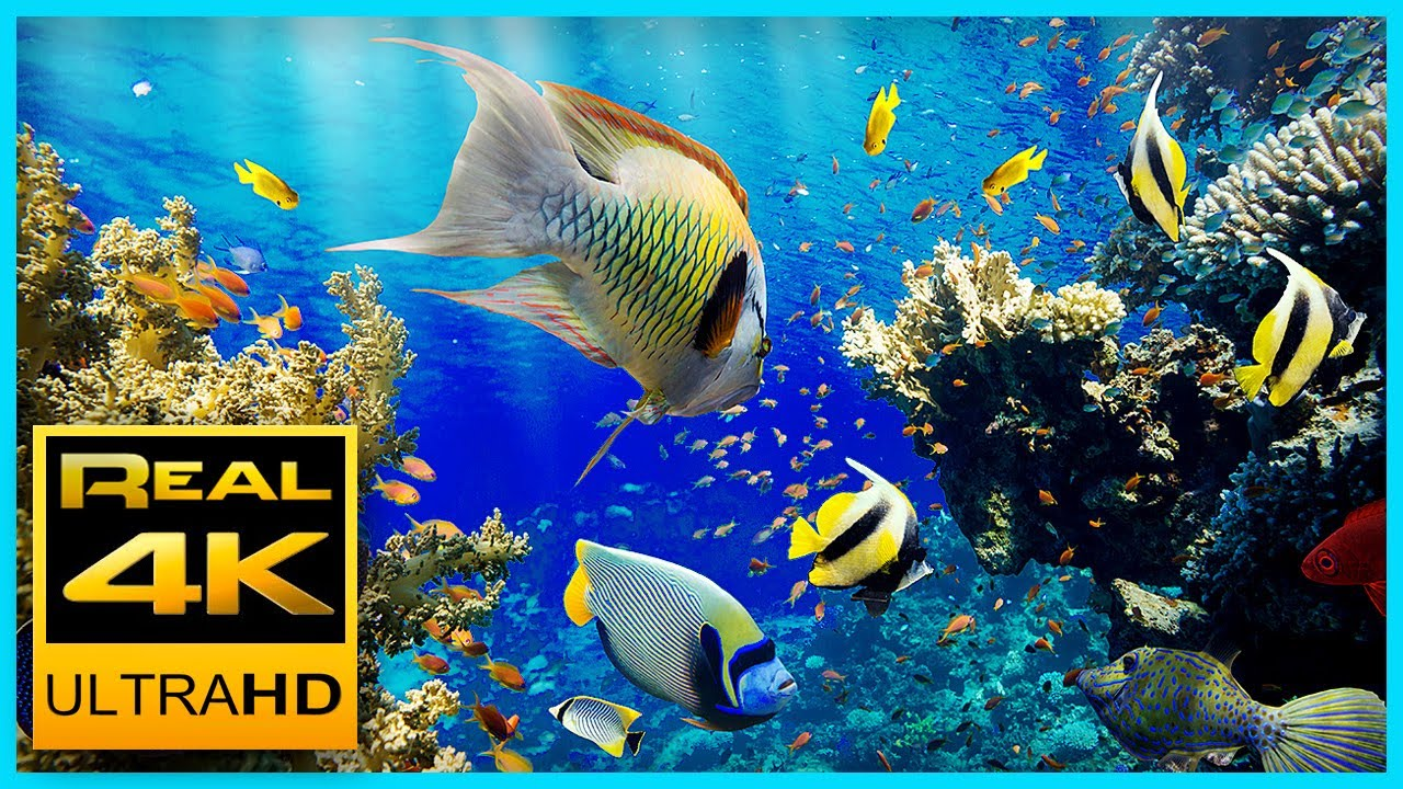 The Best 4K Aquarium for Relaxation II  Relaxing Oceanscapes  Sleep Meditation 4K UHD Screensaver