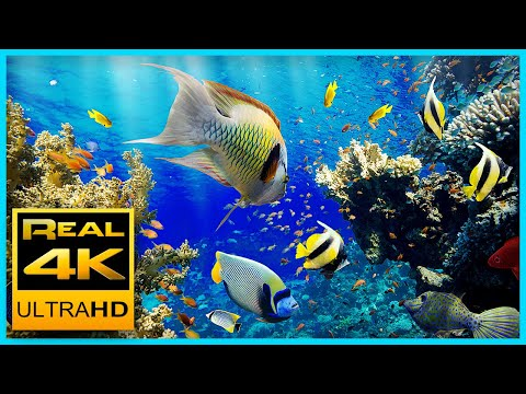 The Best 4K Aquarium For Relaxation II 🐠 Relaxing Oceanscapes - Sleep Meditation 4K UHD Screensaver