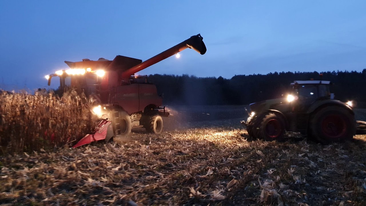 moisson du maïs pop-corn 2019 avec du case ih/capello/fendt/perard/claas