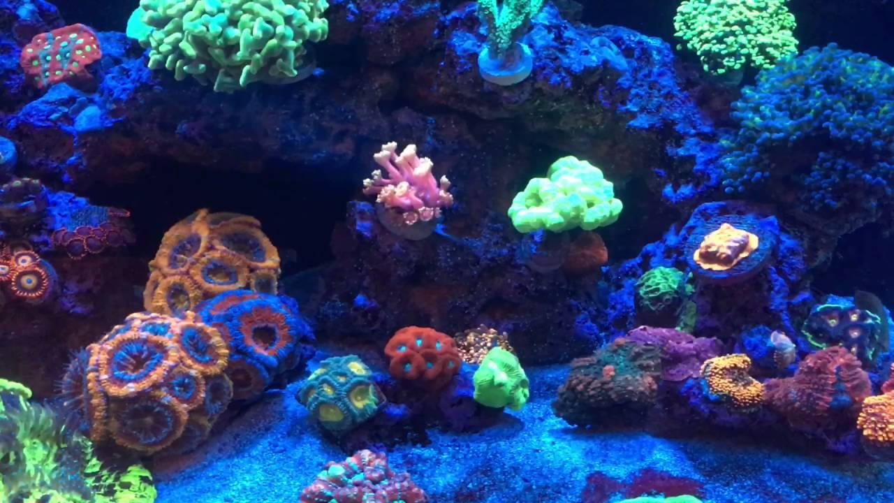 Living Reef Orlando - LFS Rimless Display Nano Reef Tanks ...