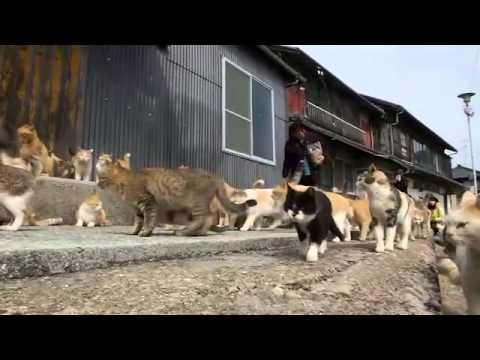 Japan: Aoshima island overrun by cats