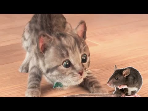 Play Pet Care Kids Game - Little Kitten My Favorite Cat - Cute Pet Game For Kids