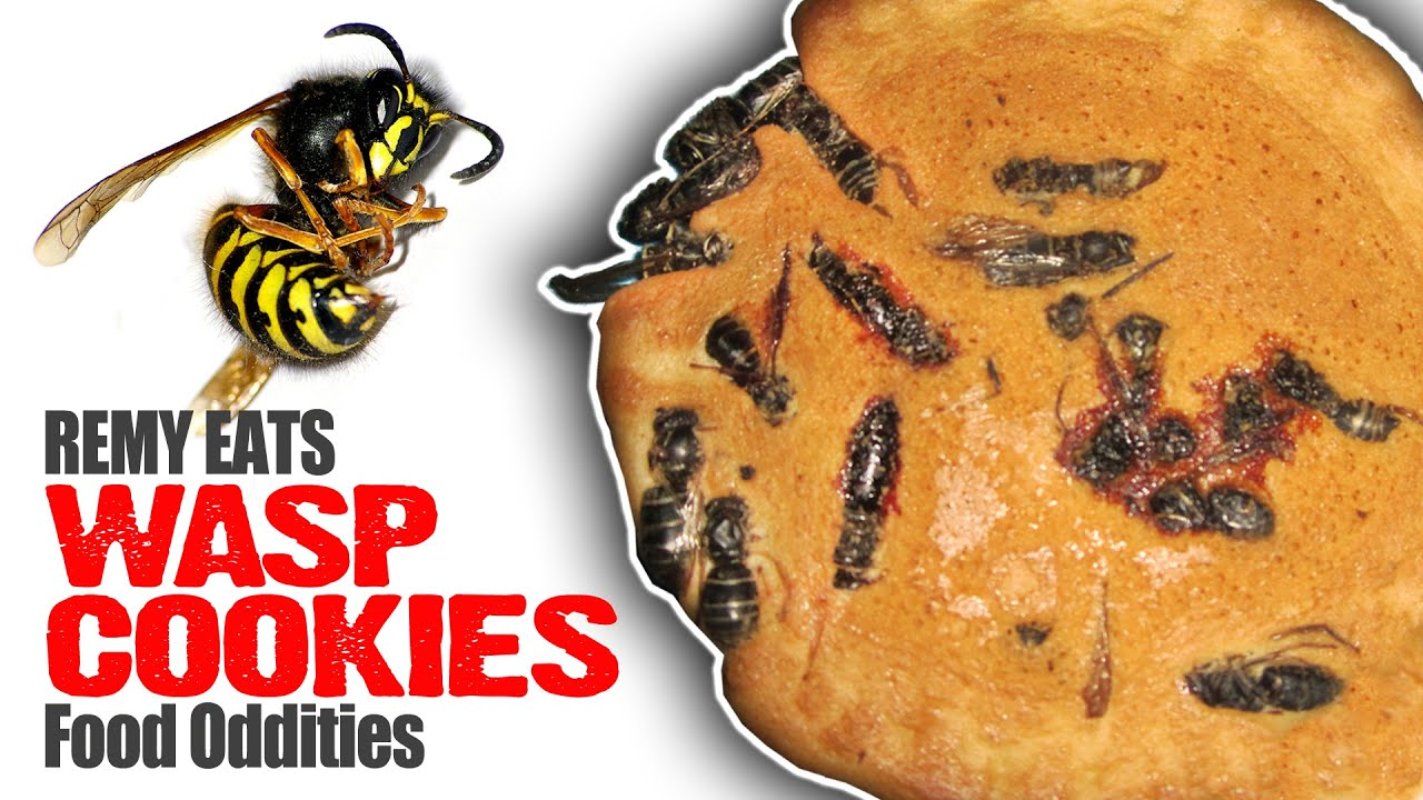 Remy Eats Wasp Cookies (www.foododdities.com) Bug Video