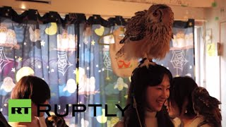 Japan: This Tokyo OWL cafe is a HOOT! (so long as they don't poop)