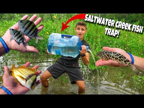 FISH TRAP Catches EXOTIC FISH For My AQUARIUM!!